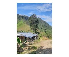 Venta de Finca en Municipio de Samaná 2 hectareas al lado de la carretera