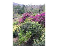 Venta de Cabaña Campestre en Curiti sobre la vía principal
