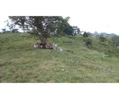 Venta de Finca de 147 hectáreas en San Pedro de Urabá