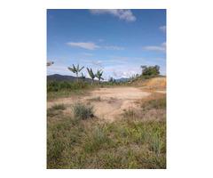 Vendo tierra apta para cultivo de aguacate en Corrientes San Vicente Ferrer