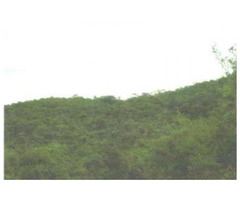 Venta De Finca En Alpujarra Tolima
